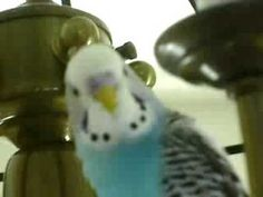 ▶ SMARTEST TALKING BIRD IN THE WORLD - YouTube