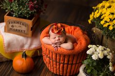 Newborn baby girl in fall setting! Colorful mums and pumpkins! www.kelliecarter.com