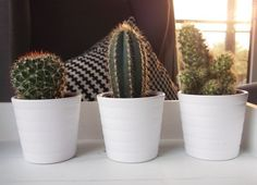 Ikea mini cacti Source: unknown