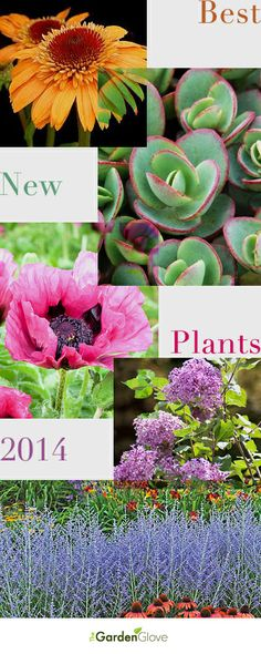 Best New Plants 2014 • Our recommendations for the Best New Plants for 2014!