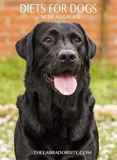 Hypoallergenic Dog Food - How Does It Work And Which To Buy - The Labrador Site