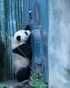 Rita Petita Yun Zi : Hey Su Lin open the door
