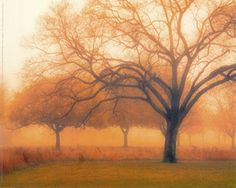 Memory Of Trees by Cocose, M. Ellen - Wall Art Giclee Print or Canvas Framed Art, Wall Art, All I Ever Wanted, Autumn Trees, Stretched Canvas Prints, Pretty Pictures, Life Is Beautiful, Find Art, Mother Nature