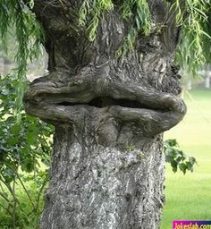 Watch this funny tree which has shape same like cartoon face. This funny nature picture will make you smile. Weird Trees, Dame Nature, Tree People, Tree Faces, Tree Carving, Unique Trees, Old Trees, Nature Tree, Plantation