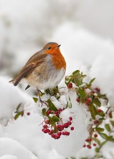 Rouge-gorge familier Erithacus rubecula European Robin Un hiver sous la neige . Pretty Birds, Love Birds, Beautiful Birds, Animals Beautiful, Simply Beautiful, Beautiful Pictures, Hirsch Illustration, Animals And Pets, Cute Animals