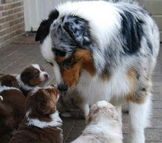 """Now listen up, kids...."" What sort of advice do you think these pups are getting from Mom? #dogs #puppies #cute #adorable #doglovers"