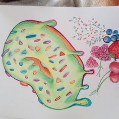 Słabość nr 2 #drawingart #donut #colorart #lovecandy