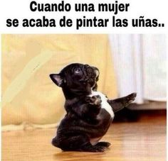 Images that if you have a very SIMPLE HUMOR and understand them, they will make you laugh for months ⋮ It& fashion diy funny tattoo bonitos cachorros graciosos Memes Humor, New Memes, Funny Spanish Memes, Spanish Humor, Animal Jokes, Funny Animals, Funny Images, Funny Pictures, Northwestern University