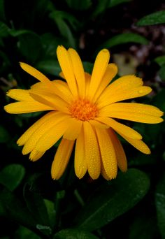 Calendula, Spring Has Sprung, Spring Flowers, Trees, Leaves, Exterior, Herbs, Plants, Tree Structure