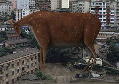 """Chinese artist and photographer Di Liu creates thought-provoking images by superimposing giant animals into urban settings.  """"His work focuses on the conflictual relationship between nature and men, particularly because of the explosion of urbanism in China.""""  More creative photography via Ufunk"""