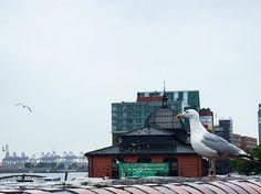 ️Breakfasttime - es möge die Klopperei um die besten Reste beginnen  #040 #bird #birds #breakfast #elbe #Fischmarkt #goodmorning #Hamburg #hh #morning #möwe #möwen #sunday #wearehamburg #welovehh
