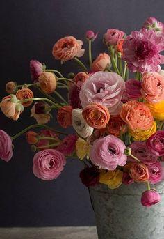 Ranunculus … Love de plantes Ranuncu – Jardin Miniature Idee – Best Garden Plants And Planting Flower Beds, My Flower, Flower Power, Flower Food, Deco Floral, Arte Floral, Beautiful Flower Arrangements, Floral Arrangements, Fresh Flowers