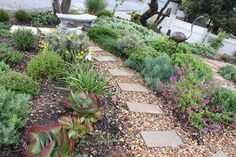 DreamScapes - landscaping, indigenous, Cape Town Patio