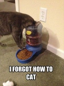 funny cat eating