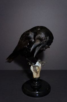 Made To Order....Antique Taxidermy European Raven Monkey Real Human Bone Victorian Display