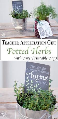 "This is such a beautiful and easy teacher appreciation gift. Free printable gift tags inside potted herbs are a great way to say ""Thank You"". 