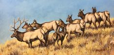 x Oil on Gessobord Elk, Oil Paintings, Animals, Moose, Animales, Animaux, Animal, Oil On Canvas, Animais