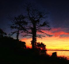 Celebrating The Trees At Sunset by Ola Allen (Olahs Photography)