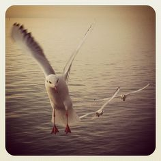 Seagulls come along ...