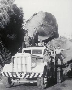 Peterbilt style all the way from 1950 www.mainpac.com.au  #Peterbilt #1950 #Mainpac #Vintage #Truck #Logging