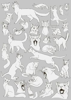 kitty cat drawing art cats draw kitten house kitteh feline paws kittens felines Anatomy reference tutorial