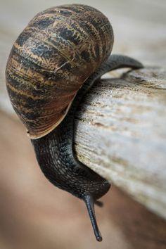 The Slow Acrobat.