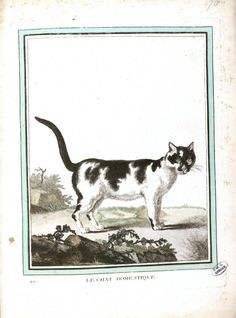 CATS IN THE ENLIGHTENMENT (Part 6 - Naturalists' Views on the Domestic Cat) - THE GREAT CAT