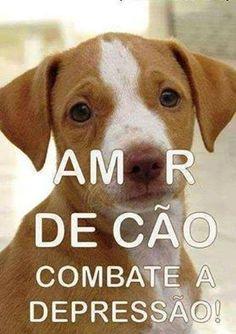COMBATE TUDO E DEIXA NOSSA VIDA MAIS FELIZ! <3  #petmeupet #filhode4patas #maedepet #maedecachorro #cachorro #amoanimais #amocachorro