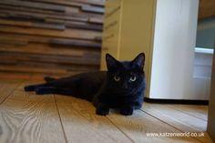 Cat Travel: Neko no Jikan Amemura – Osaka Cat Cafe Part 6 check this fantastic photo from Katzenworld