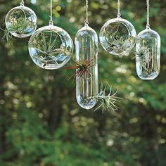 Glass bubble planters in the kitchen window...