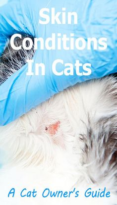 A cat's skin can display a variety of symptoms and then there are the skin-related behaviors such as biting the skin or scratching. Skin-related symptoms can indicate a skin problem Cat Skin Problems, Cat Diseases, Cat Biting, Sad Cat, Cat Signs, Cat Behavior, Conditioner, Kitty, Display
