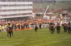 Istabraq leads the field home to win by an authoritative 12 lengths in the 1998 Champion Hurdle at Cheltenham
