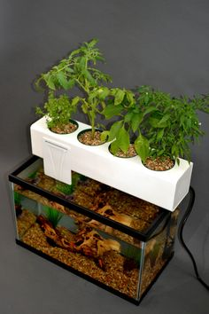 Andrew De Melo's Aquaponic Blue Green Box Uses Fish Waste To Provide Nutrients…