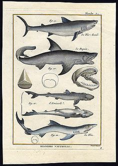 nunavut fishing licence