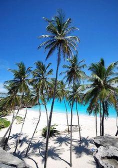 Palmen am Sandstrand, Belize.