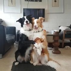 Adorable dog love to pose for the camera Adorable Dogs Love To Pose For The Camera Adorable Dogs Love To Pose For The Camera Cheezburger - Funny Dog Videos, Funny Animal Memes, Cute Funny Animals, Dog Memes, Funny Animal Pictures, Cute Baby Animals, Funny Dogs, Animals And Pets, Cute Cats