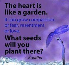 Buddha Quote - Plant good seeds...