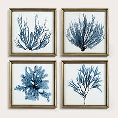 Ballard Designs Petite Blue Seaweed Art - Print by Ballard Designs Coral Art, Watercolor Images, Watercolor Ocean, Coastal Wall Art, Coastal Decor, 3d Max, Framed Prints, Art Prints, Leaf Art