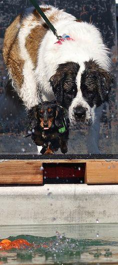 Dog Encouragement Card by Sophiagoestothedogs on Etsy