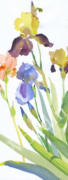 Pretty painting idea, I love Iris flowers, and this has several colors. Beautiful. by Mary Woodin #watercolorarts