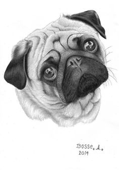 Exactly what if you threw a pug party and EVERYBODY came. with their pugs? Baby Animal Drawings, Animal Sketches, Pencil Art Drawings, Art Drawings Sketches, Cute Drawings, Dog Sketches, Pug Tattoo, Baby Pugs, Pug Art