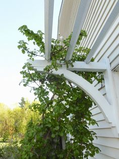 pergola over garage doors from My Weeds Are Very Sorry: Come Back in a Couple Years