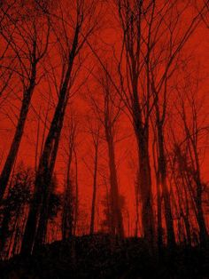 scary creepy orange Halloween black night forest spooky eerie black and orange orange and black worldofhalloween