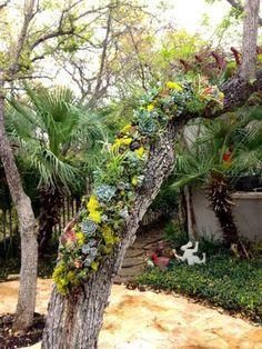 La coquelourde des jardins silene coronaria est une for Au jardin de la famille de fabreville