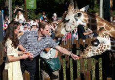 William and Kate feeding giraffes in Australia.