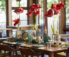 DIY holiday amaryllis - The House That Lars Built