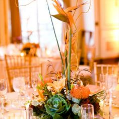 Exotic Modern Centerpieces... my two favorites together... succulents and birds of paradise
