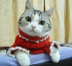 Y cuatro gatos increíbles que se vistieron con cuatro increíbles suéteres.