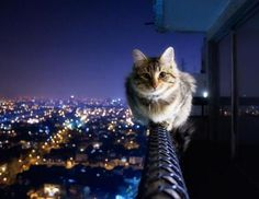 Fearless kitty is, well, fearless. L - Oh noes. This photo makes me all nervous like I'm looking over the edge of the building myself. Please get down, kitty. Funny Cats, Funny Animals, Cute Animals, Diy Funny, Baby Animals, Crazy Cat Lady, Crazy Cats, Cool Cats, Gatos Cool