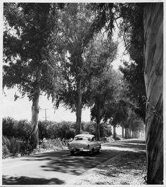 No. Garey Ave looking south (1954) by 47specialdeluxe, via Flickr California History, Pomona California, San Gabriel Valley, San Dimas, West Covina, City Of Angels, Weapon Storage, Explore